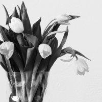 Тюльпаны :: Елена Чебыкина