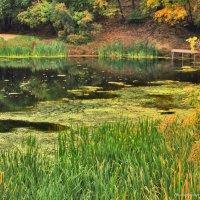 Заросший осенний пруд :: Андрей Ситников