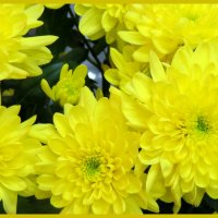 Дарите женщинам цветы... :: Светлана