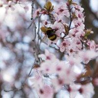 Весна. :: Мария Собко
