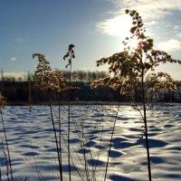 Зима :: Татьяна Белогубцева