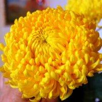 Дарите жёлтые цветы! :: Валентина ツ ღ✿ღ