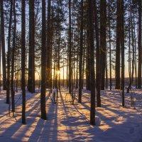 Закат сквозь деревьев :: Станислав
