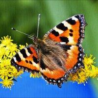 Бабочка искала себе дом - цветок :: Валентина *