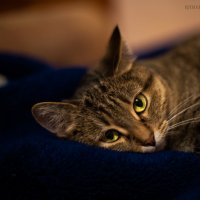 Моя котейка :: Райдара Лесная