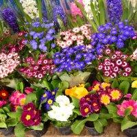 Весенние цветы. :: Владимир Болдырев