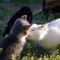кошка Изабелла :: Алина Фомина