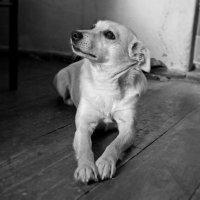 Собака в сельской хате :: Натали Деметер