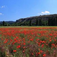 Весенние поля Крыма :: Марина Дегтярева
