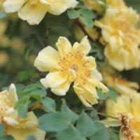 Желтый цветок :: Мария Лебедева