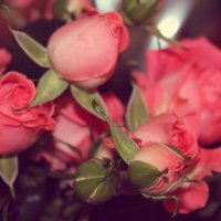 цветы :: Катерина Лячок