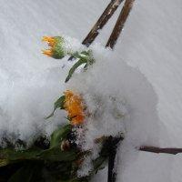 из под снега :: Лилия Бобкова