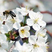 Пчёлка :: Влад Никишин
