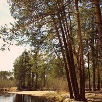 в лесу :: Татьяна Анагина