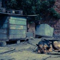 Одиночество. :: Taras Koldakov
