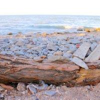 Берег Каспийского моря :: Н Ражбадинова