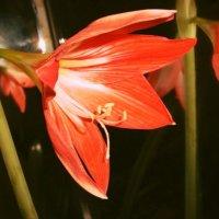 Первое цветение :: Зарема Ибрагимова