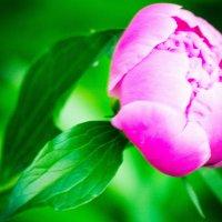 Мои цветы :: Жанна Шишкина