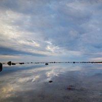 белое море :: Софья Артюшина