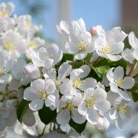 весна в моем саду :: Валерий Лазарев