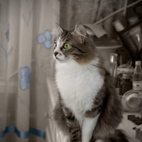 Кошка :: Мария Арбузова