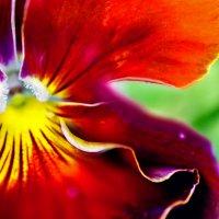 Цветочная рюша :: Anastasia Gosteva