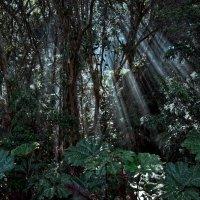 свет в джунглях :: сергей агаев