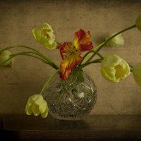 Жёлтые тюльпаны. :: Анна Тихомирова