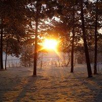 Загадочный лес :: Зарема Ибрагимова