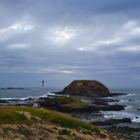 Philip Island,Australia :: елена Shs