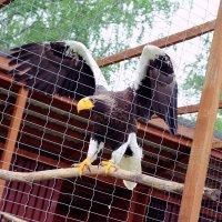 Питомник птиц в Калужской области :: Ирина Ефимова