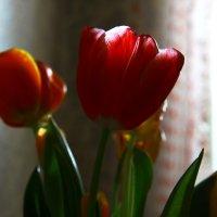 вечерний тюльпан :: Виктория Ташланова