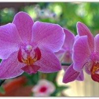 Орхидея :: Александр Гапоненко