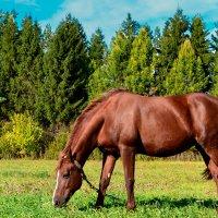 Horse :: Ksu Siniagina