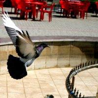Одинокий голубь :: Мишка Михайлов
