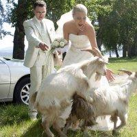 свадебные картинки_7 :: Павел Федоров