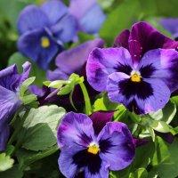 Цветы :: Ольга Маркелова