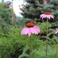 цветы :: Екатерина Перебейносова