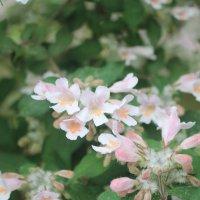 Белые цветы :: Мария Лебедева