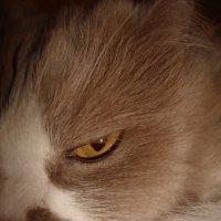 Домашний хищник :: Максим Болотов
