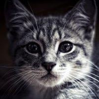 Просто кот..;) :: Андрей Поспелов