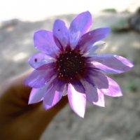 цветок :: Елизавета Черкова