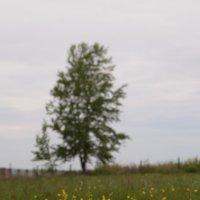 В поле :: Максим Рожин
