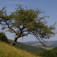 дерево :: Yunna _____
