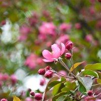 Цветы мая... :: Наталья Rosenwasser