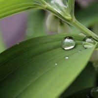 После дождя :: Анастасия Фролова