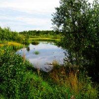 Озеро :: Снежана Удалова