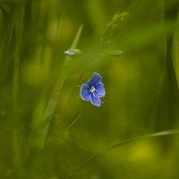 В травяной чаще :: Nikolay T