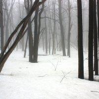 Скоро весна :: Михаил Крюков