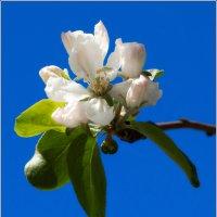 Весна :: Ольга Самойлова